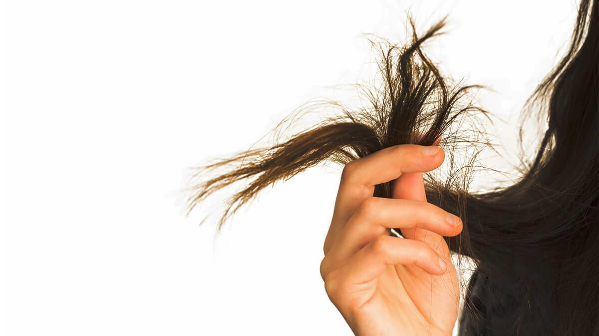 दो मुंहे बाल