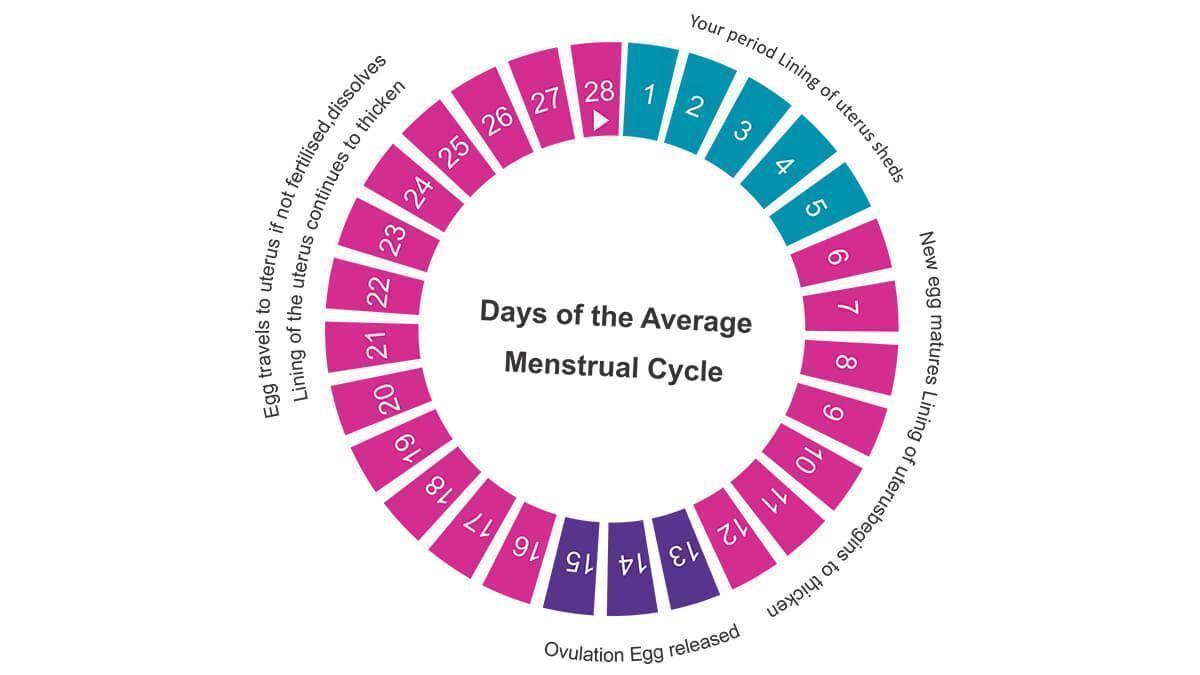 ओव्यूलेशन कैलेंडर क्या है और कैसे काम करता है