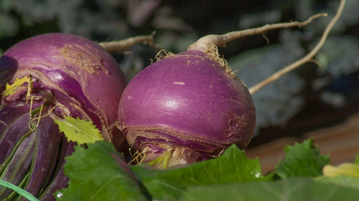 Shaljam Turnips | Zealthy