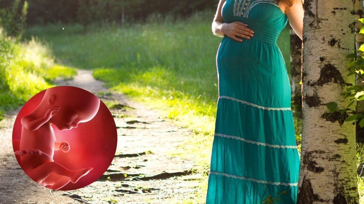 Week_16_of_your_pregnancy___Zealthy