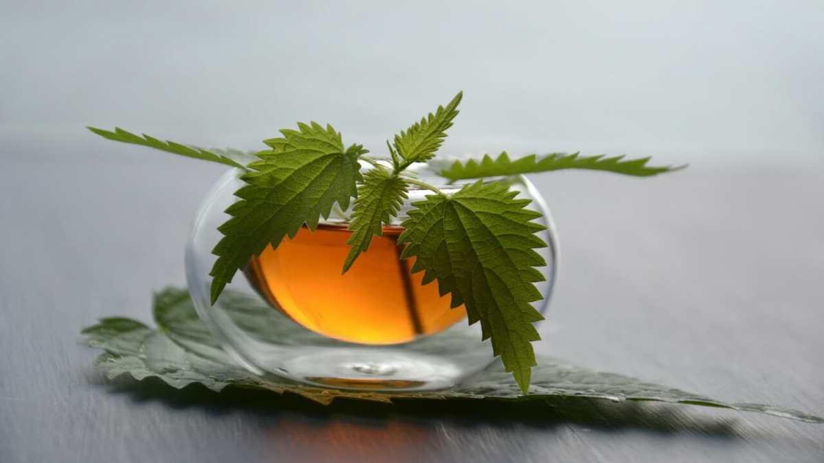prajnan kshmta ko badhane ki herbal davaye | Zealthy