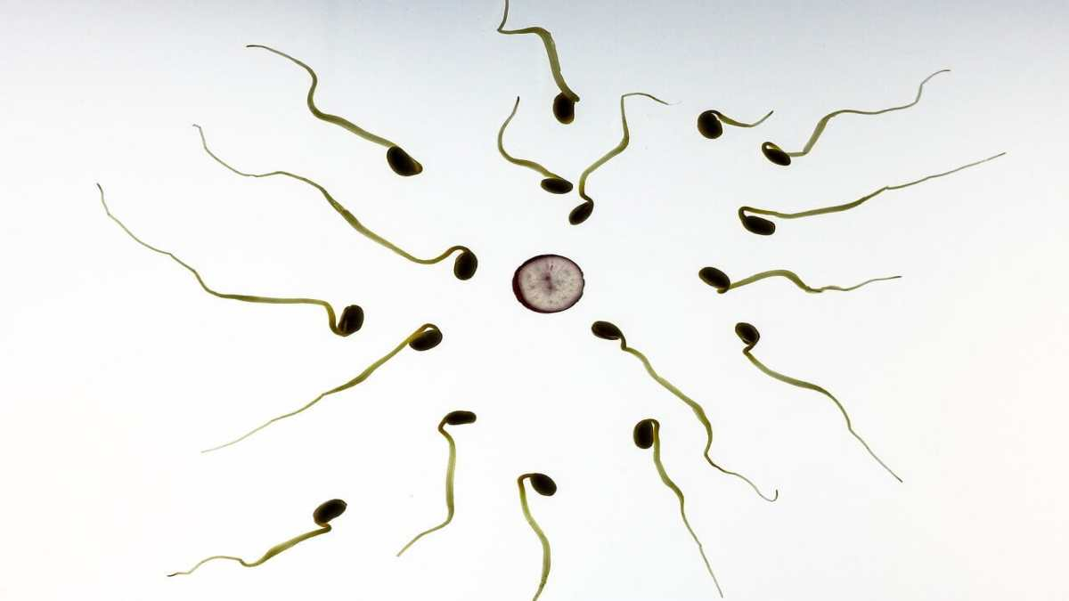 natural treatment for low sperm count
